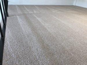 Fresh Clean Carpet